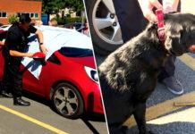 Policía rompe ventana para rescatar a dos perros