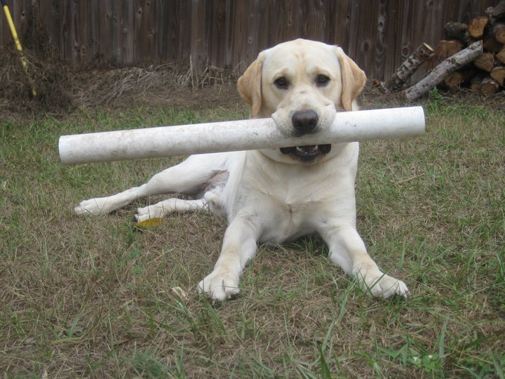 Sam el perro