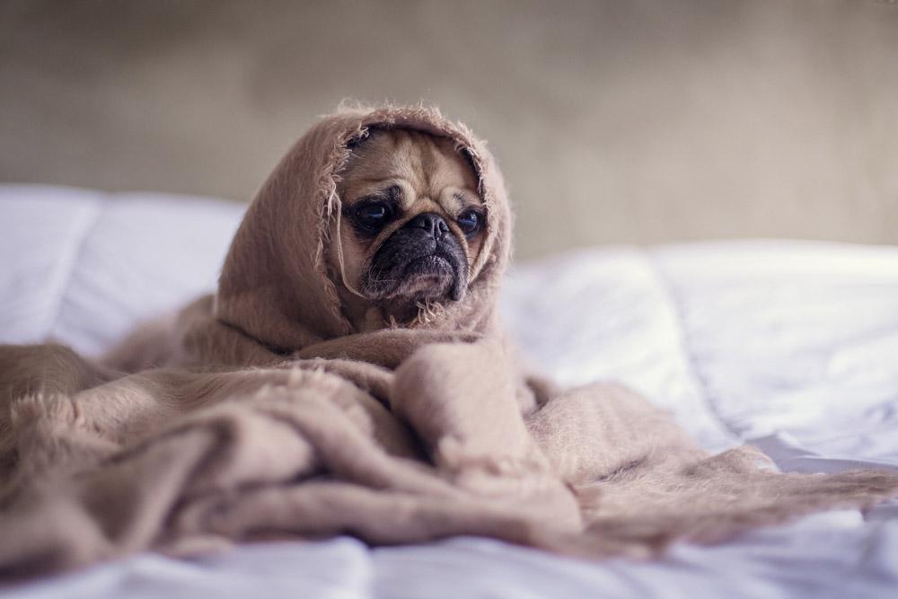 camas para canes