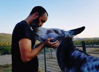 Burro amoroso recibe besos de su salvador