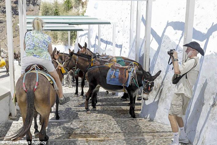 Burros maltratados por turistas obesos