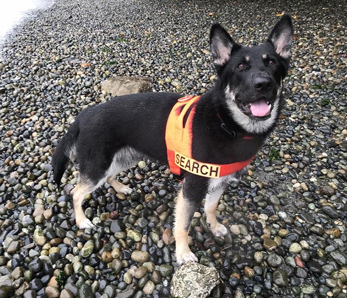 Cachorro entrenado