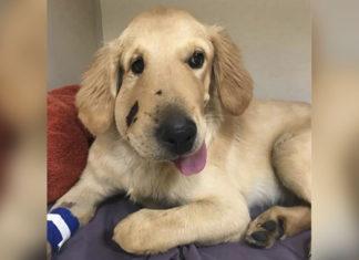 Cachorro salva a mamá de la mordedura de una serpiente