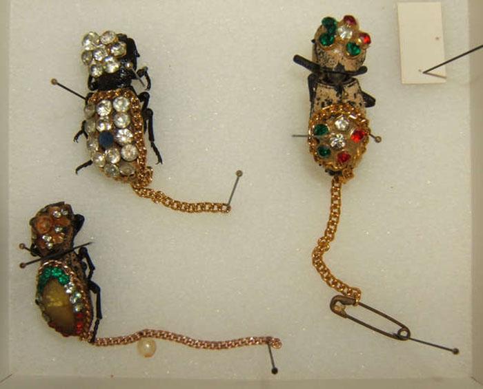 Escarabajos como broche