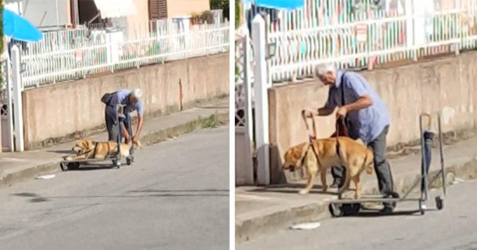 Hombre pasea a su perro discapacitado