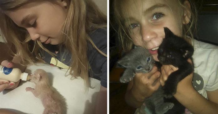Niña da su vida para salvar a sus gatitos