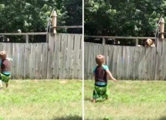 Niño juega a buscar la pelota con el perro de su vecino