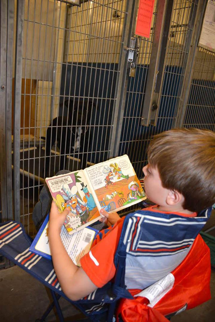 Niño lee cuentos a los perros