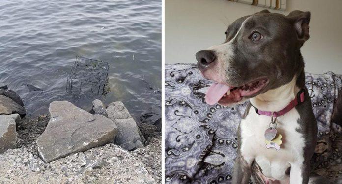 Perro abandonado para que lo arrastrara la marea