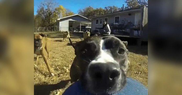Perro corre con una cámara en su boca grabando su escape