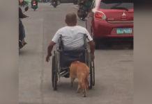 Perro empuja silla de ruedas de su papá