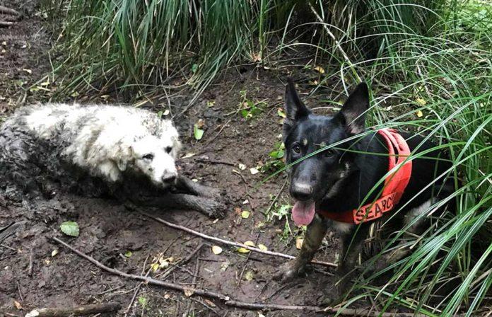 Perro encuentra a otro perro atrapado en el barro durante dos dias