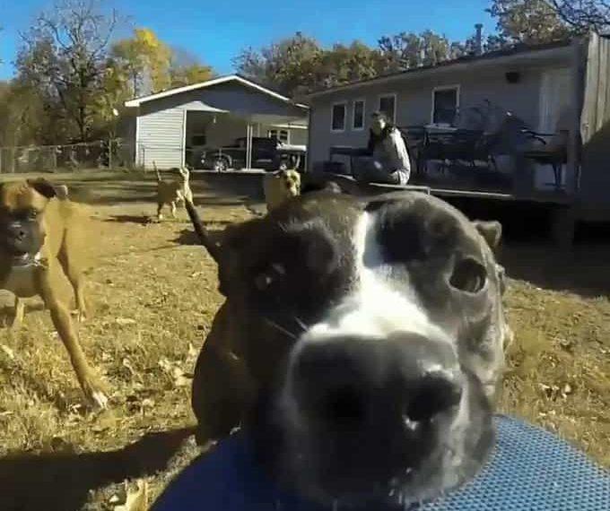 Perro escapa con cámara en la boca