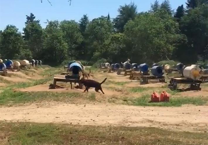 Perros bajo el sol