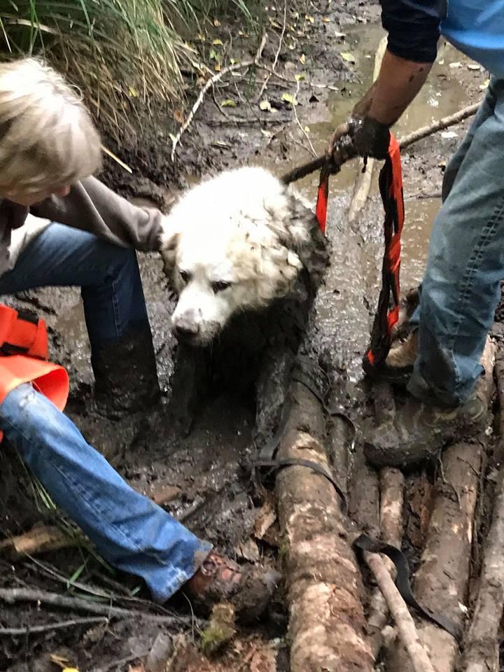Puppy en el lodo