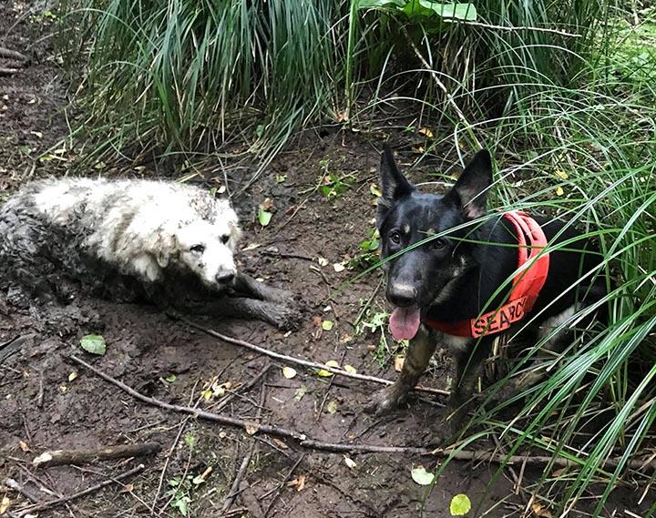Rescate de Puppy