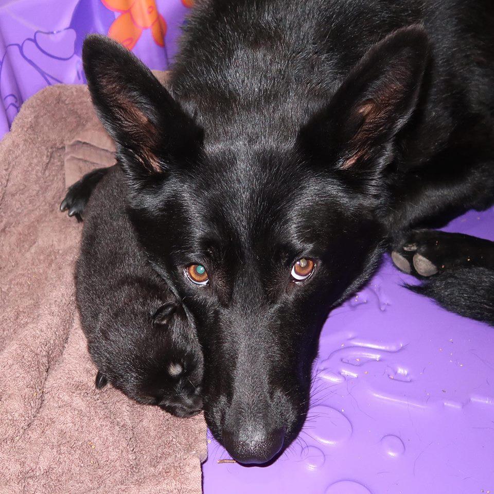 Salma y su cachorro