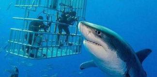 Tiburón blanco más grande captado en cámara