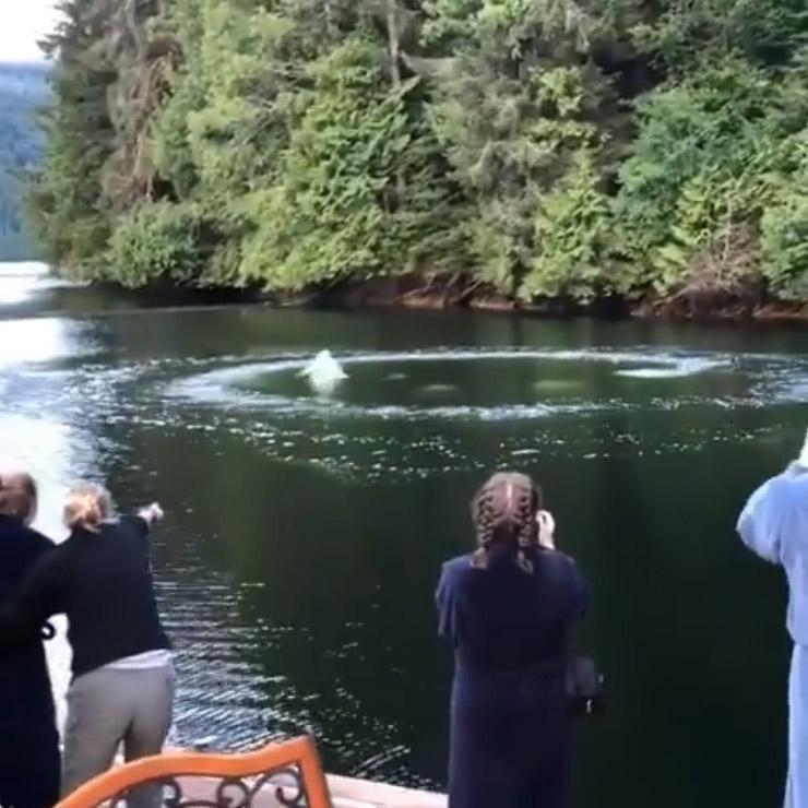 Ballenas en el agua