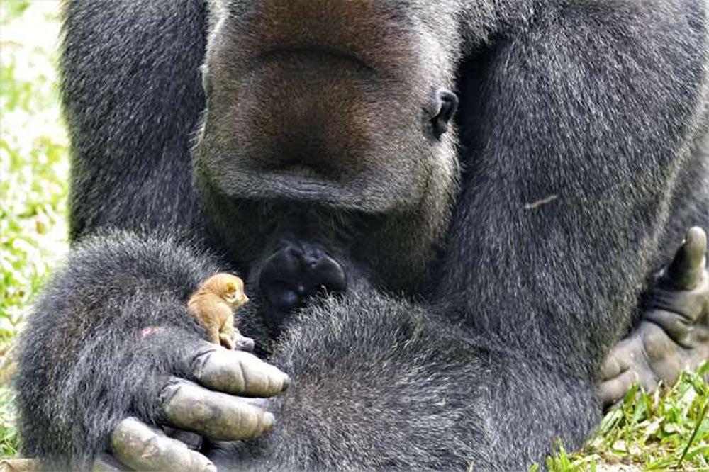 Bobo y el primate