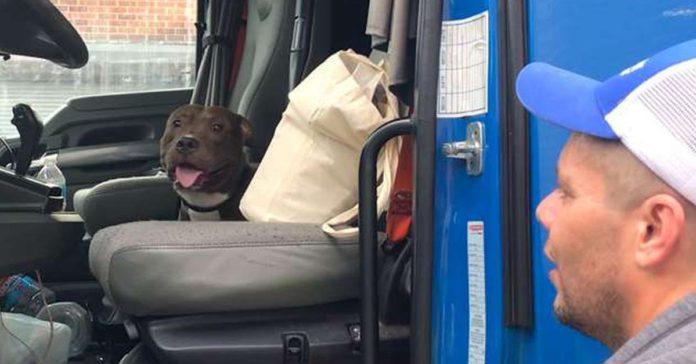 Camionero condujo 2800 millas para brindarle una segunda oportunidad de vida a un perro