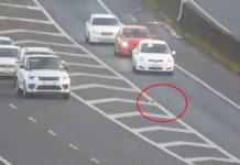Conductores dejan que una familia de patos cruce la calle