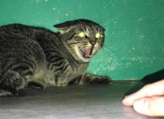 Esta gatita se encontraba tan asustada que no permitía que nadie la tocara