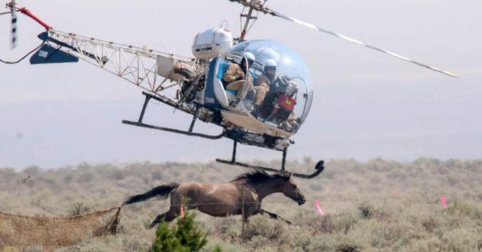 Están asesinando cruelmente a miles de caballos salvajes en Estados Unidos