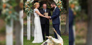 Este perro se robó todas las miradas en la boda de sus padres humanos