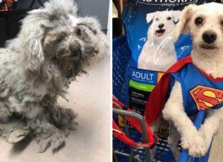 Este perro tenía su pelaje tan enmarañado que apenas podía moverse