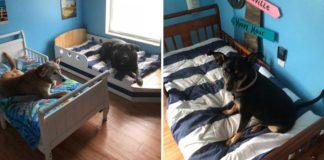 Estos perros rescatados tienen cada uno su propia cama para niño