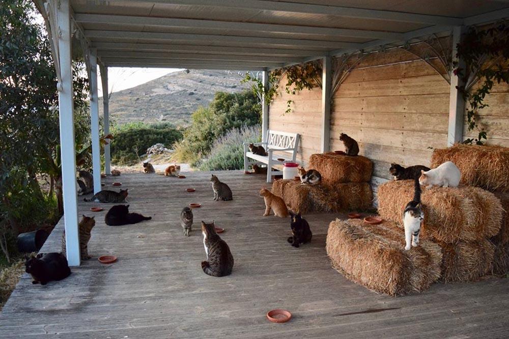 Felinos del santuario