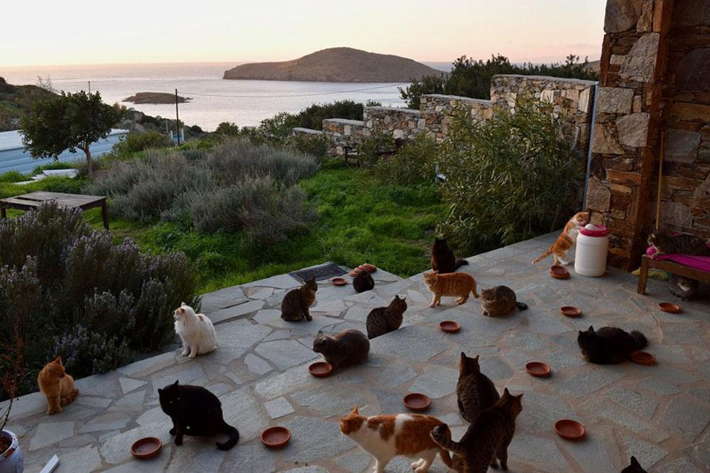 Gatos del santuario
