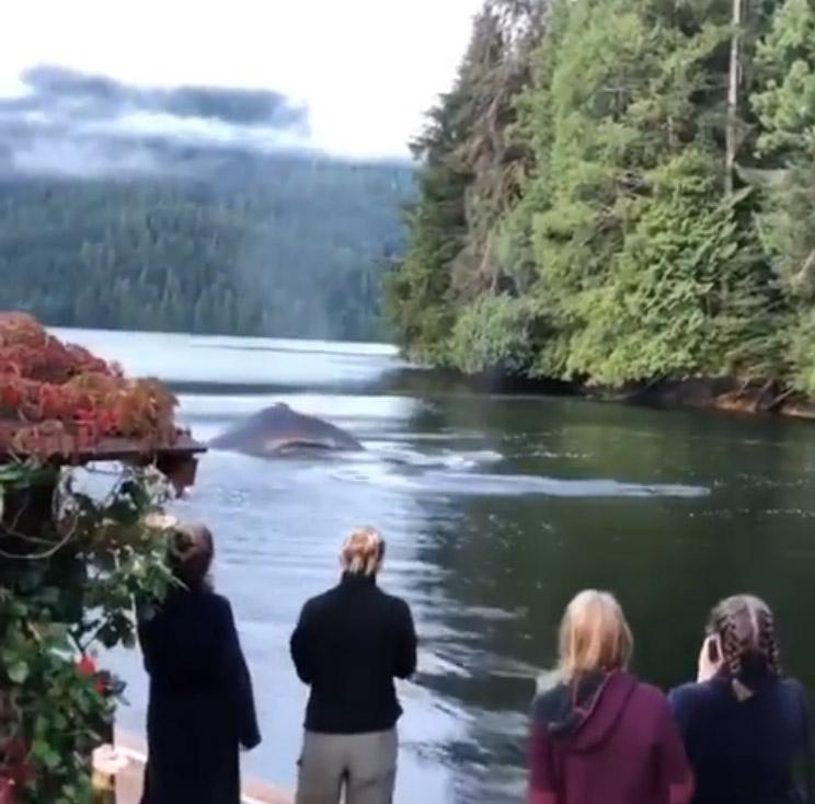 Grupo de ballenas en Canadá