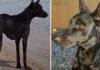 Hombre encontró y rescato a un perro moribundo en una isla desierta