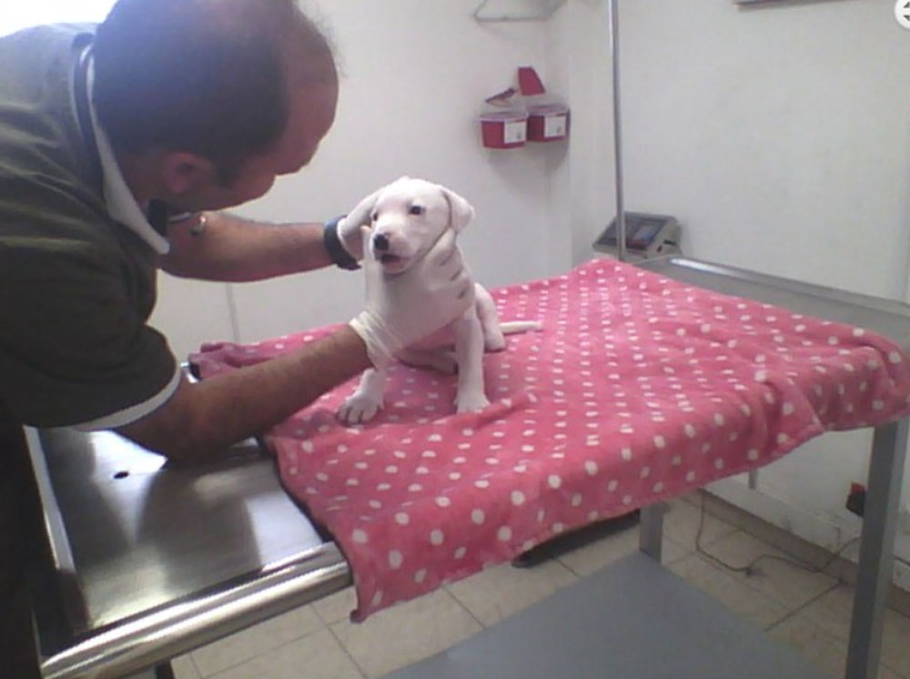 Hope en el veterinario
