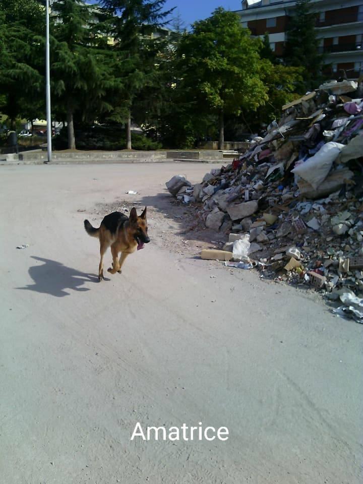 Kaos en escombros
