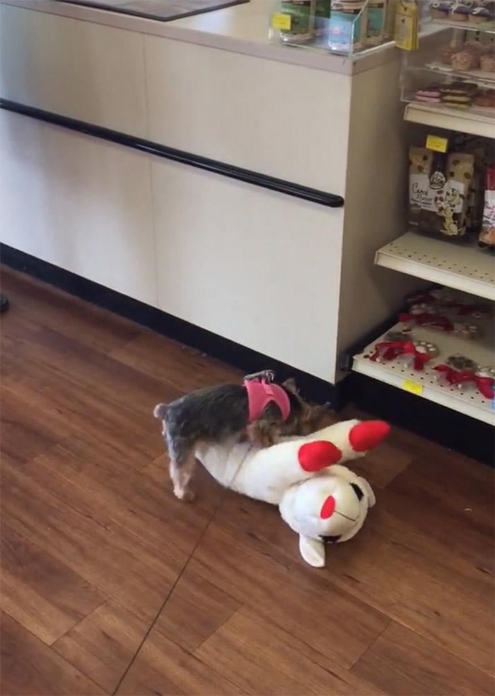 Lucy recibe juguete