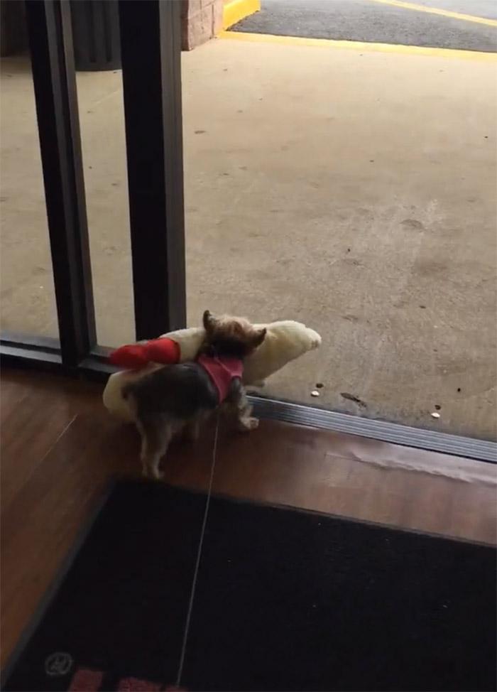 Lucy se marcha de la tienda