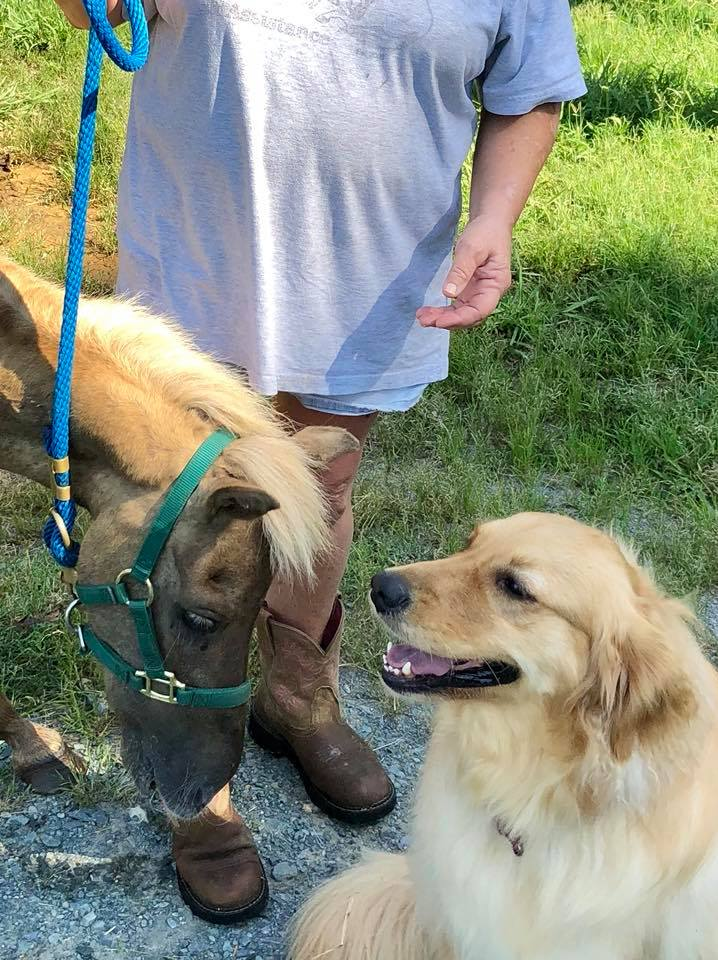 Molly consuela caballo