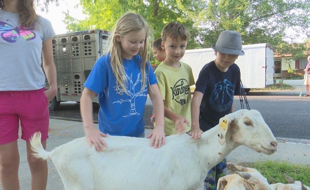 Niños y cabras