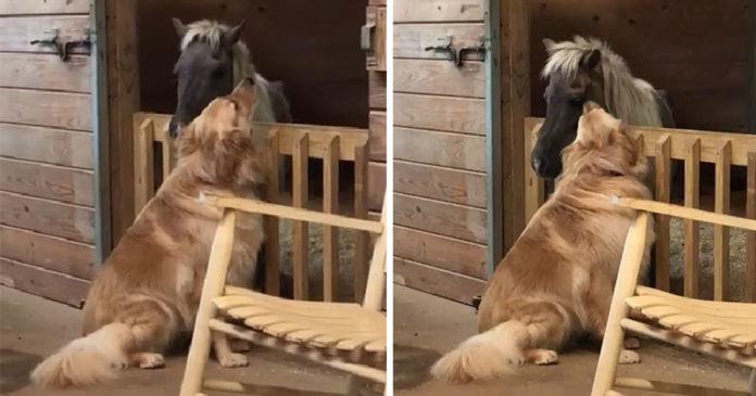 Pero consuela caballo enfermo rescatado