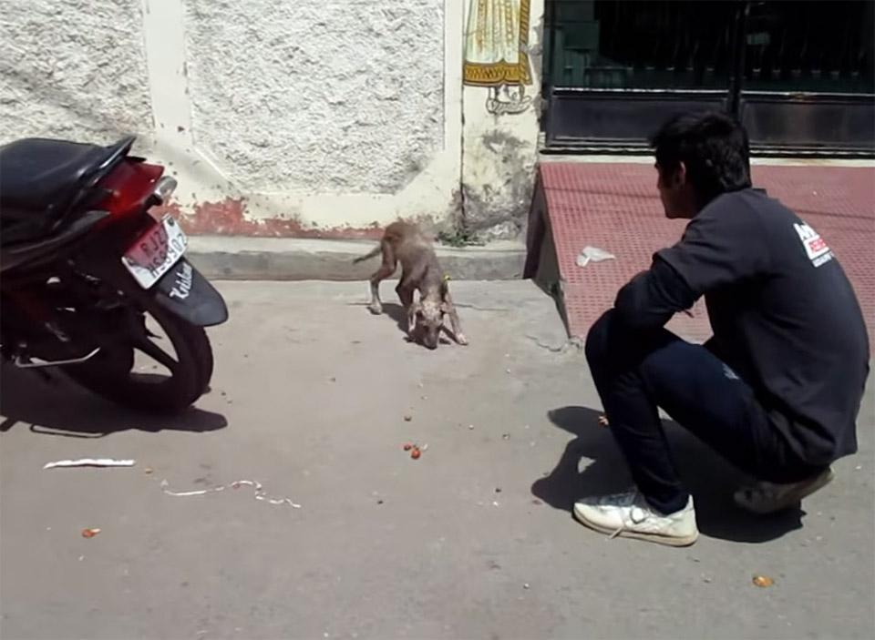 Perrito sin pelo rescatado