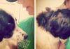 Perro abandonado en refugio está triste porque su familia no lo quiere