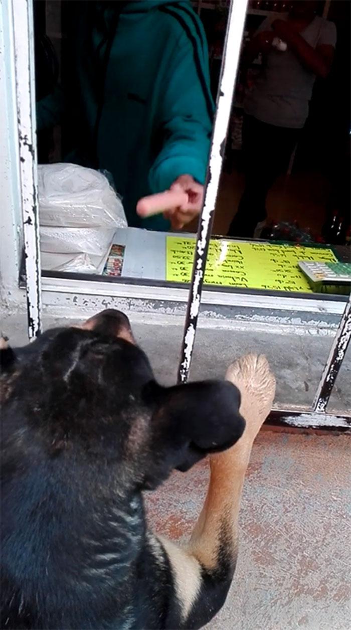 Perro compra salchicha
