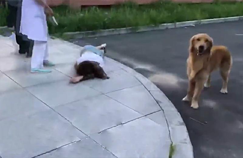 Perro cuida de su mamá
