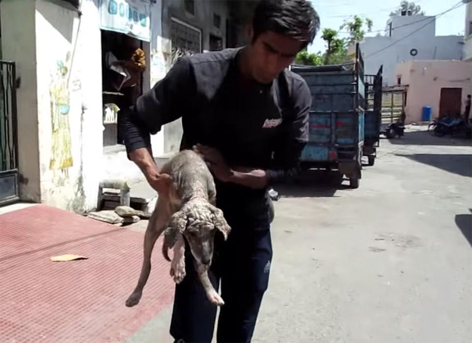 Perro rescatado en la India