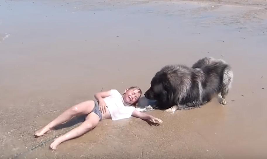 Perro salva niña