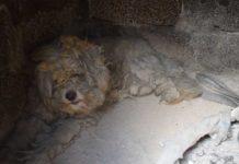 Perro sobrevivió a un incendio forestal ocultándose en un horno de piedra