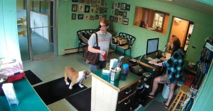 Policía busca a una mujer que abandonó a su Bulldog en una peluquería